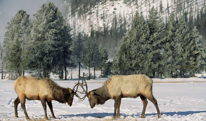 природа, зимние, сообщения, красивых, животных, подборка, девушек,
