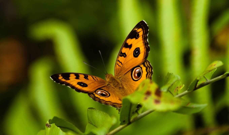 бабочка, полет, бабочки, листья, трава, взгляд, узоры,