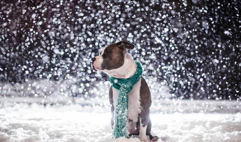 снег, животные, шарф,