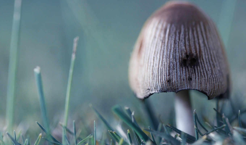 гриб, несъедобный, трава, зелёный,