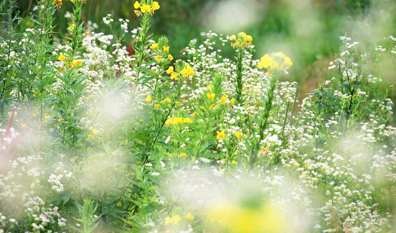 cvety, полевые, красивые, krasivo, красивый, очен, нояб, спасибо, lug, цветами, красивых,