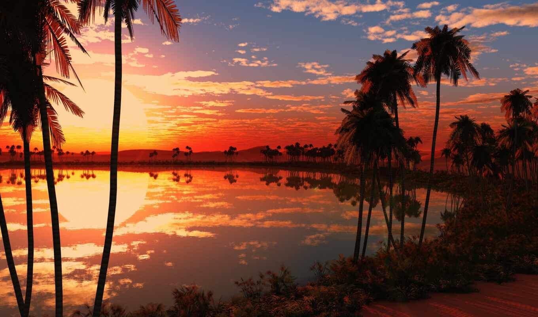 закат, palm, pic, картинка
