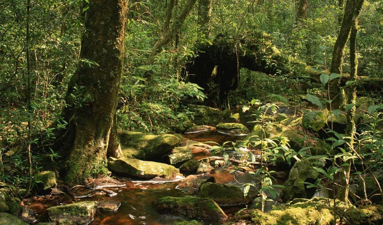 лесу, лес, три, где, леса,