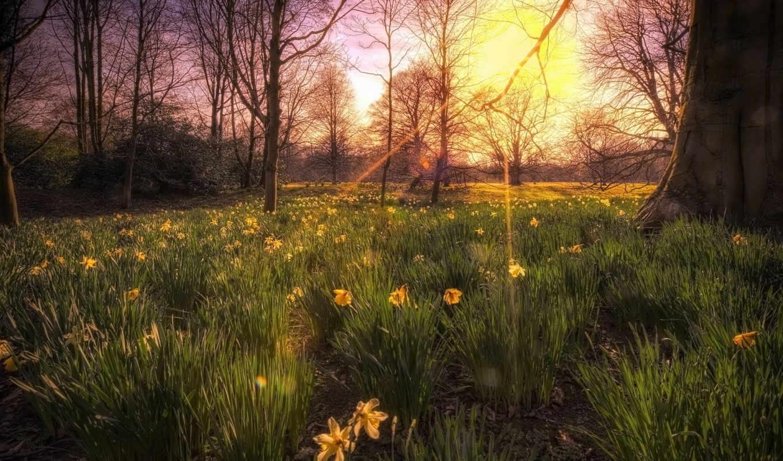 красивые, солнца, цветы, деревя, свет, страница, orquesta, luz, природа, flores,