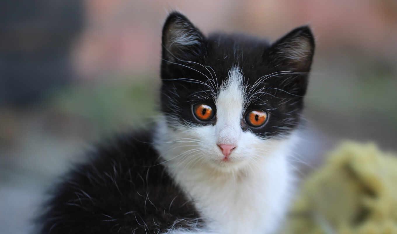 зелёный, глаз, аватар