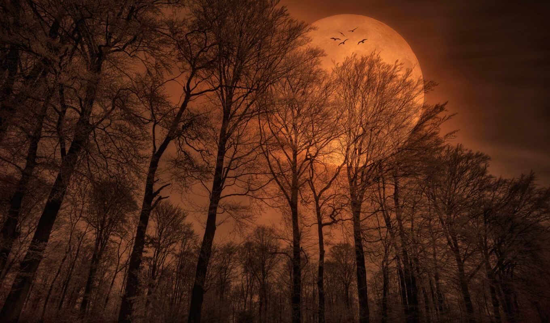 природа, луна, лес, птицы, вечер,