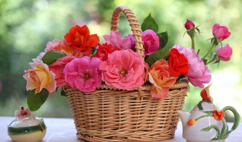 розы, садовые, цветы, роз, цитатник, компьютера,