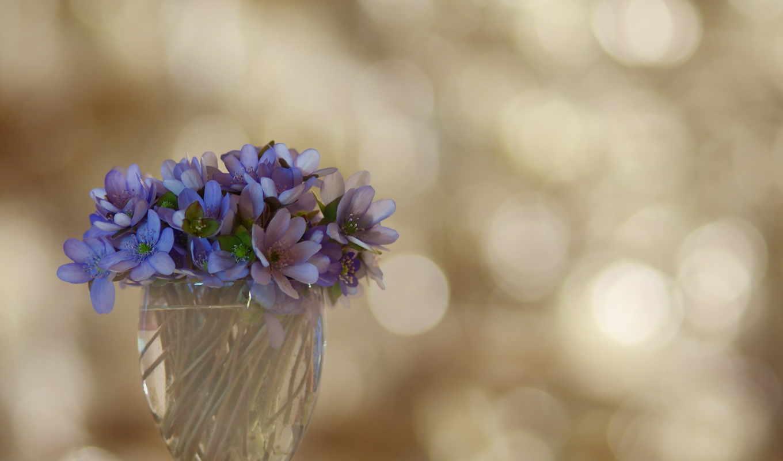 коллекция, за, красивые, цветы,
