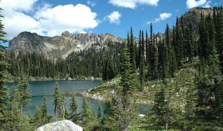 природа, картинка, леса, landscape, ёль, горы, паркс, usa,