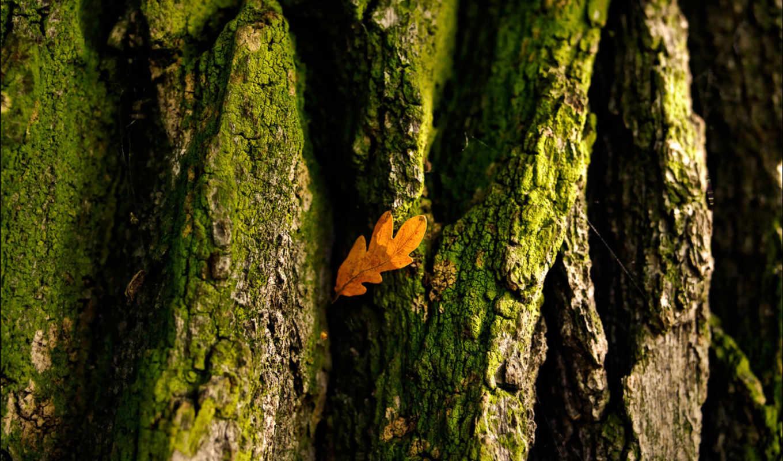 дерево, кора, лист, картинка,