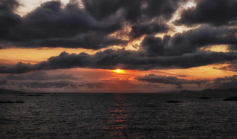 оранжевый, тучи, птица, закат, солнце, вечер, небо, картинка,