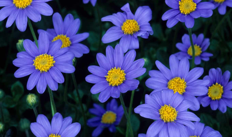 moradas, flores, цветы, нов, возможность, форматы, news, самая, страница, день, закачки, играй, качественная, коллекция, большая,
