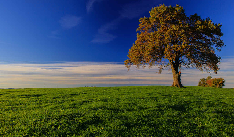 бавария, природа, германия, картинка, дерево, луг, трава,