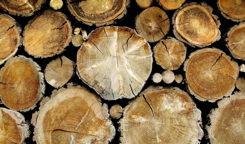 спил, текстуры, деревя, перо, деревьев, древесный,