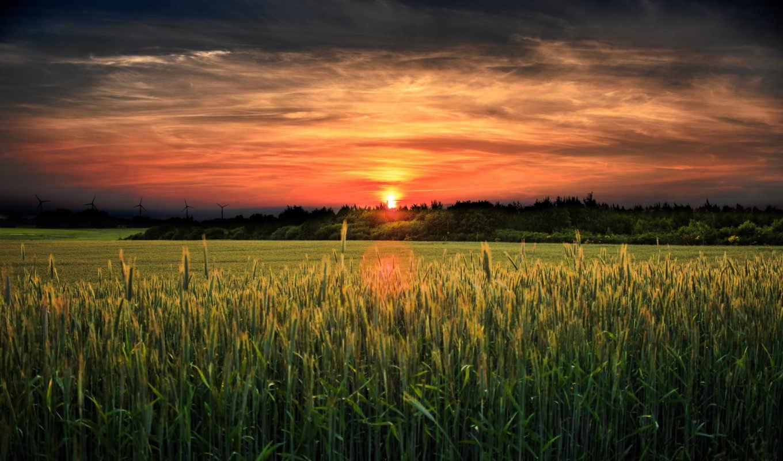 закат, поле, landscape, красивые,