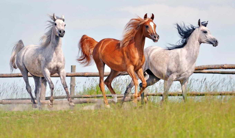 лошади, лошадь, олимпийского, going,