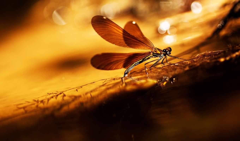 ,комар,закат,насекомое,