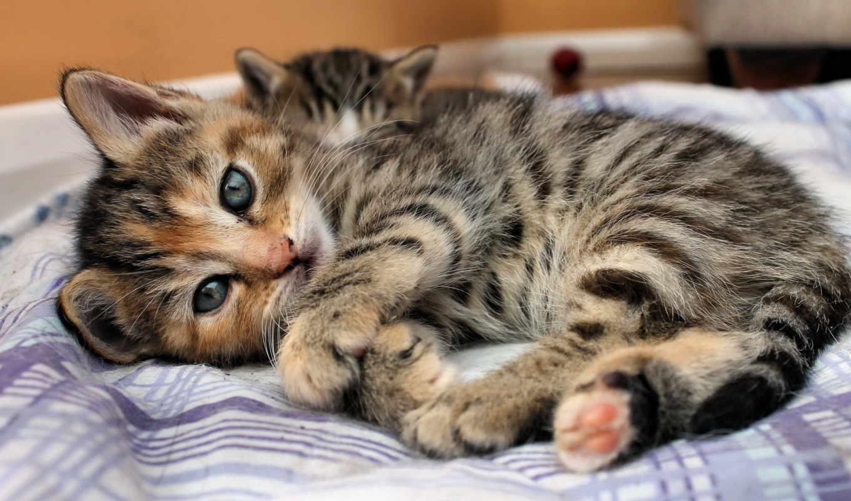 кот, лежит, свет, котенок, взгляд, кровать, карие,