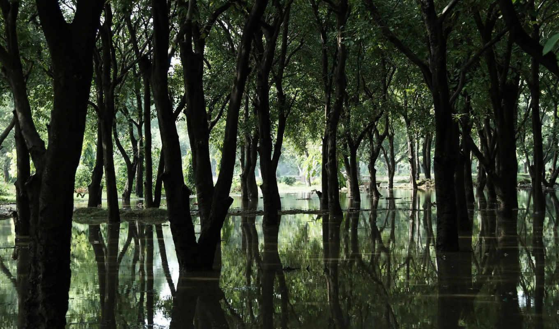 вода, лес, деревья, болото, nature, desktop, swamp, смотрите,