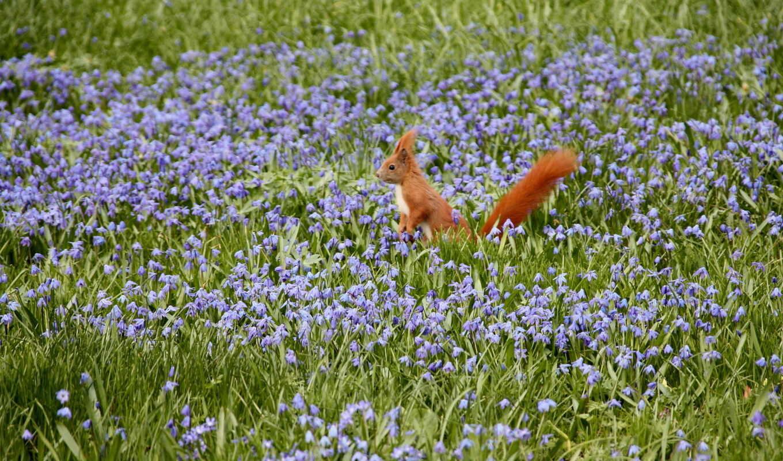 priroda, cvety, pole, белка,