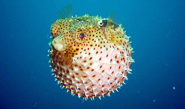 fish, шар, underwater, bubble, шипи, world,