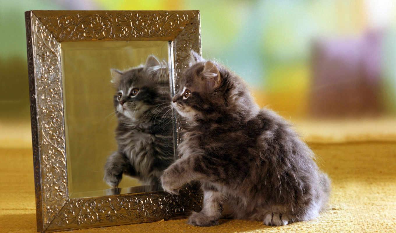 зеркало, отражение, котенок, browse, пушистый,