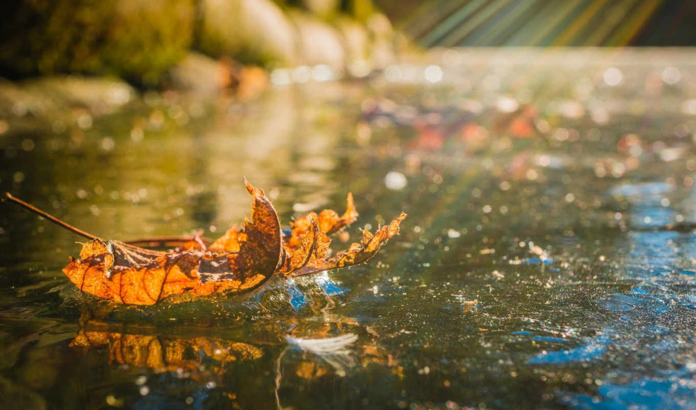 water, осень, изображение, листья, макро, природа, картинка, leaf,