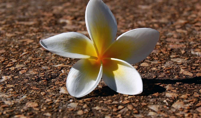 цветы, flowers,