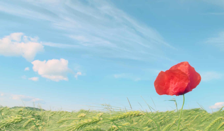 больше, поле, одинокий, mac, картинку, red, разрешениях, разных,
