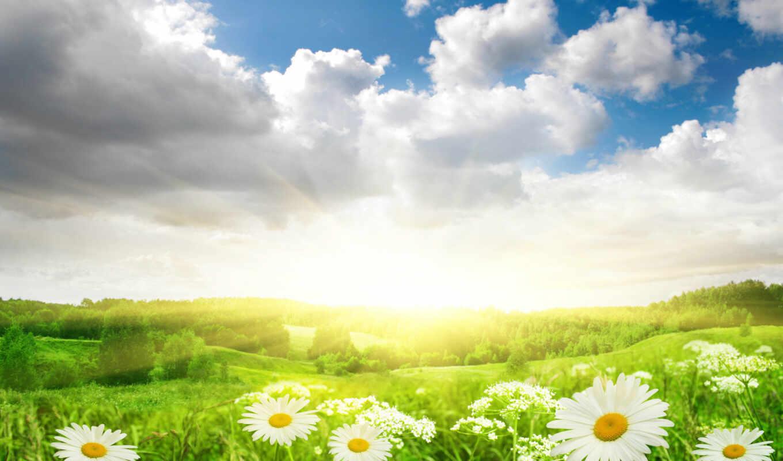 поле, ромашки, цветы, трава, природа, небо, sun, облака,