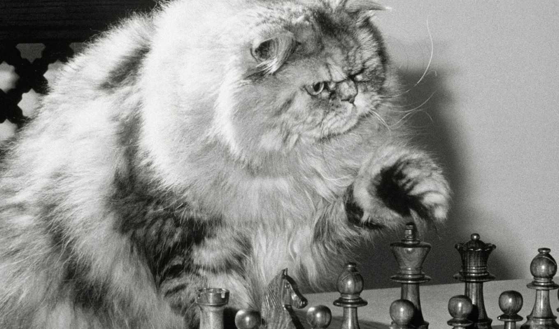 chess, приколы,