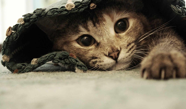 ,, кошка, усы, морда, кожа, глаз, полосатый кот, хищник, котенок,