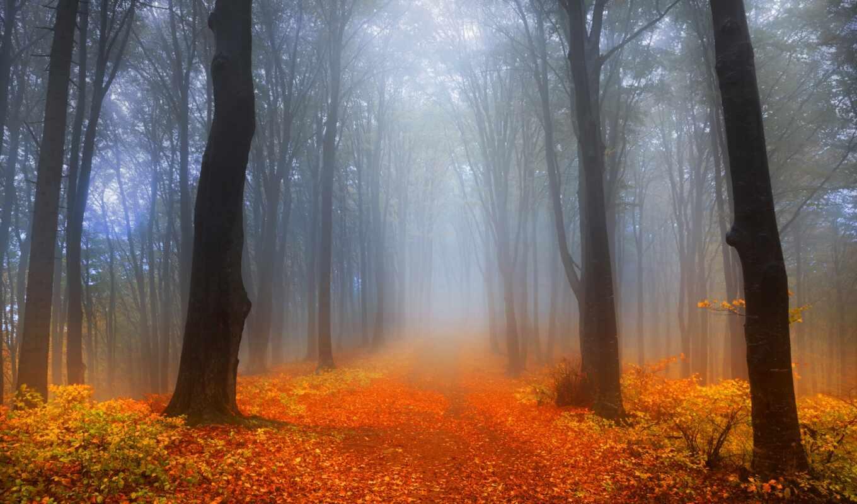 fore, foggy, листва