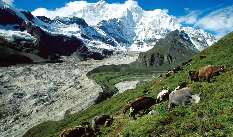 tibet, природа, красивые, туры, животных, природы,