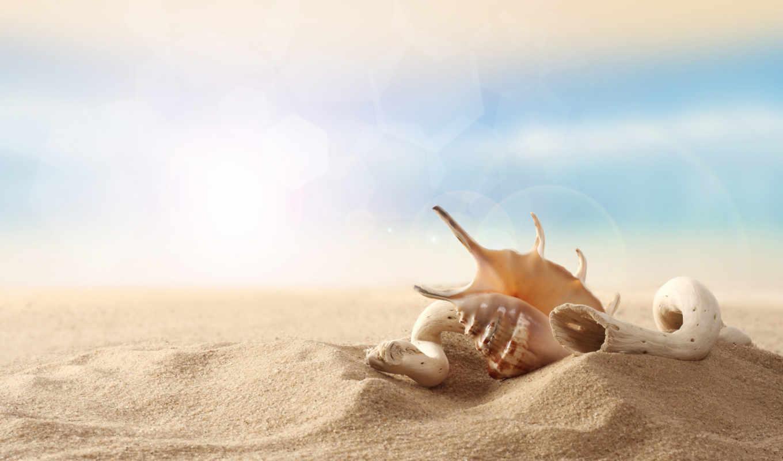 песок, seashell, пляж, небо, деревяшка,
