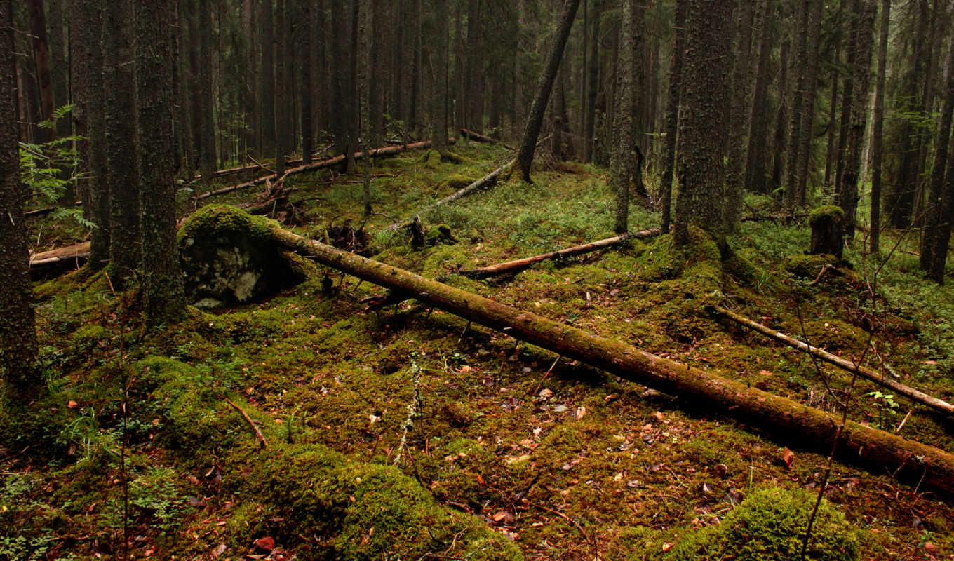 , trees, download, forest, felled, photos, desktop,