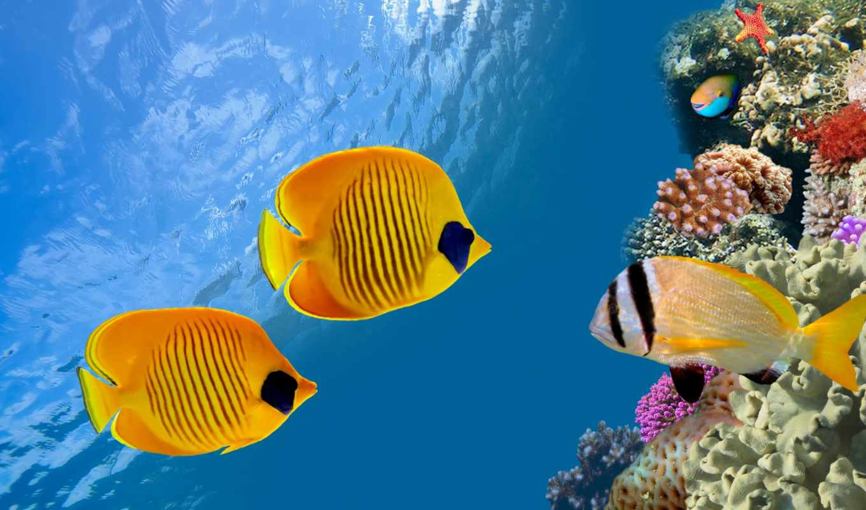 море, fish, rub, цены,