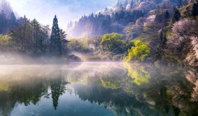 весна, природа, туман, дерево, утро, озеро, south, korean