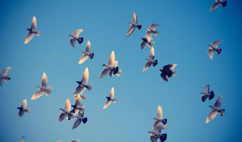 небо, голуби, крылья, полет, птицы, картинка, картинку, ubuntu, же, поделиться, понравившимися, так, картинками, салатовую, мыши, кликните, кномку, кнопкой, левой,