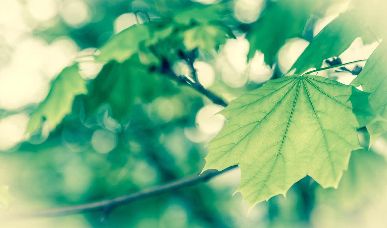 весна, широкоформатные, нояб, макро, самые, зелёная,