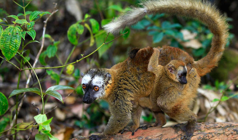 zhivotnye, share, коала, gopher, sloth, dr, lemur, прикольные,