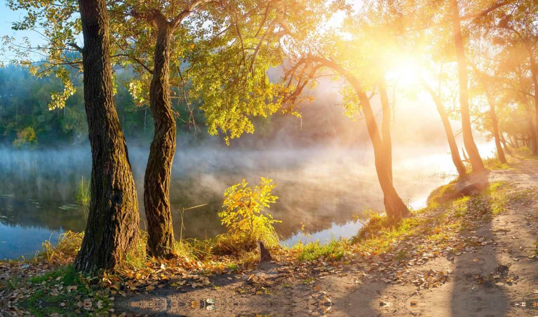 landscape, rays, свет, солнечные, листва, солнечный, красивая, осенние, дорога, природа, trees,