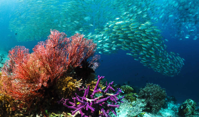 raja, ampat, terumbu, ди, karang, yang, dan, untuk, dive, indonesia, laut,