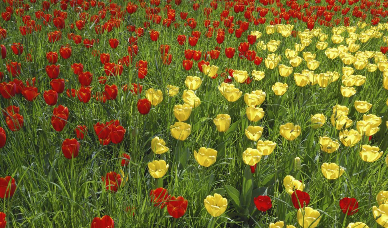 обои, цветы, красивые, обоев, quot, год, новый, от