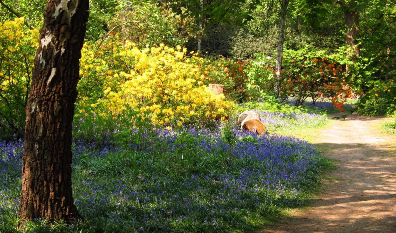 картинка, природа, березы, сады,