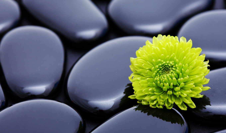 камни, фотообои, фотопанно, цветы, chrysanthemum, картины, модульные, harmony, manufacture, stn,