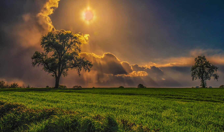 поле, робочий, природа, шпалер, дерево, sun, mobile