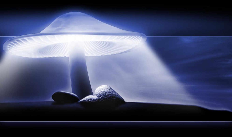 free, mushroom, music, desktop,