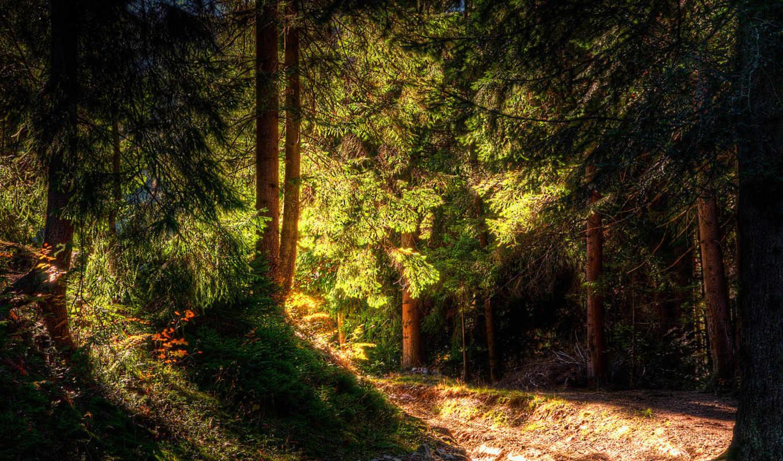 les, priroda,