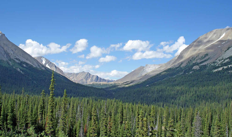 зелёный, лес, природа, горы, небо,